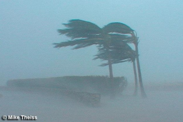 hurricane tree